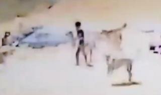 شاهد مجموعة من الكلاب الضالة تهجم على طفل في تبوك