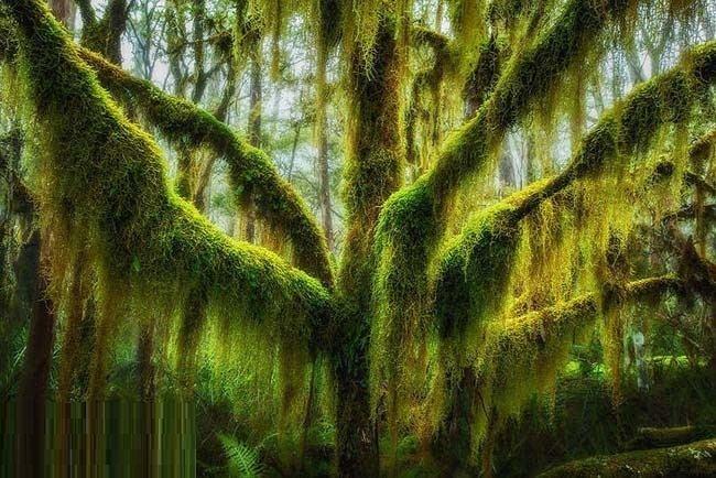 أشجار نادرة وغريبة لن تراها إلا في هذه الدول - صور